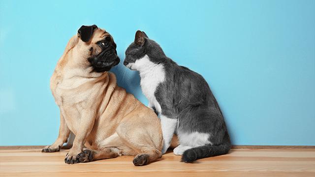 Cane e Gatto More Than Pets